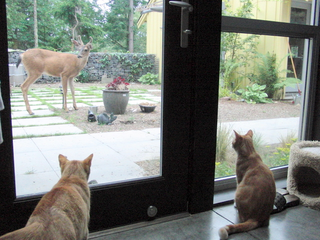 Archie and Dillon watching deer stealing plants